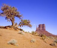 Tree and Mitten. Landscape view of a lone tree with a mitten the background in Monument Valley Royalty Free Stock Photography
