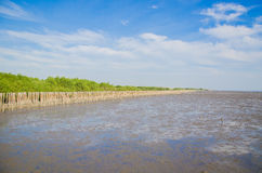 Landscape view of mangrove forest Stock Photos