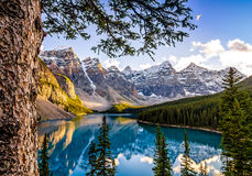 Landscape view of Morain lake and mountain range, Alberta, Canad. Landscape view of Morain lake and mountain range with tree in foreground, Alberta, Canada Royalty Free Stock Image