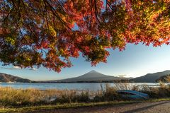 Landscape of view the Mount Fuji and Bright red maple leaf frame. Kawaguchiko In the morning is a tourist attraction of Japan. In a small town royalty free stock photos