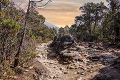 Landscape view of mountain path splitting around stone with buddhist mantra. stock photos
