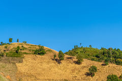 Landscape view of mountaintop with maize field and blue sky Royalty Free Stock Photography
