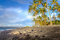 Landscape view of ocean beach with palm trees and sea turtle. Hawaii, USA Stock Image