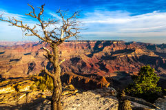 Landscape View Of Grand Canyon With Dry Tree In Foreground Royalty Free Stock Photo