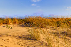 Landscape view over the sand dunes in portugal. Stock Photo