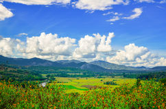 Landscape view of a paddy rice fields Royalty Free Stock Photo