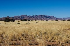 Landscape view in the pan of Sossusvlei in Namibia. Africa royalty free stock photos