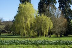 A landscape view of parkland. A landscape view of parkland with weeping willows stock image