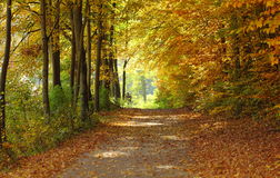 Landscape, view of path in autumnal park Stock Photo