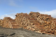 A landscape view of a pile of pine logs in Perthshire, Scotland, UK. Landscape view of a pile of pine logs in Perthshire, Scotland, UK Royalty Free Stock Images