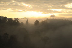 Landscape view of rainforest in mist at morning on mountain, Doi Royalty Free Stock Images