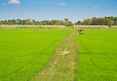 Landscape view of rice fields Stock Photo