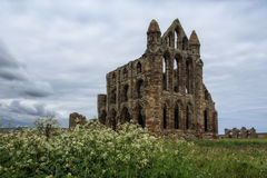 Landscape with a view of the ruins of Whitby Abbey. On the background of dramatic cloudy sky and May blooming wildflowers stock image
