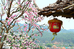 Landscape view of sakura tree with chinease lamp. Hook under teak leaf roof at Ban Rak Thai, Mae Hong Son Royalty Free Stock Photos