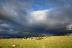 Sheep grazing in Scotland. Landscape view of a sheep farm near Inverness, Scotland Stock Image