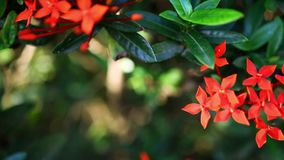Landscape view of small Red flowers. Video with. Shift. Video with shift, change in focus and bokeh. Macro shoot 1920*1080 stock footage