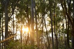 Landscape View Of Sun Set In Forest