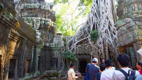 Landscape view of Ta Prohm Temple in Angkor wat complex, Siem Reap Cambodia