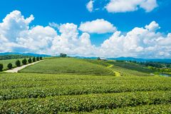 Landscape view of tea plantation at at choui fong farm,Chiang Rai, Thailand is Top tourist destinations. Landmark of Chiang Rai royalty free stock photo