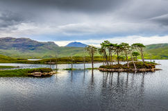 Landscape view of trees in a lake, Scotland Stock Images