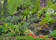 Landscape View of Tropical Garden in Thailand Stock Image