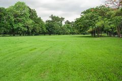 Landscape view of tropical green grass meadow field and trees in public park. royalty free stock images
