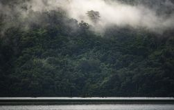The landscape view of tropical rain forest, nature scene royalty free stock photo