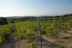 Landscape view of a vineyard and green hills in Crete, Greece. Stock Photo