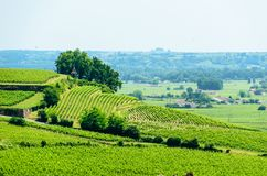 Landscape view of vineyards near Saint-Emilion, France. View over vineyards around the town of Saint-Emilion in the Bordeaux region of France royalty free stock photos