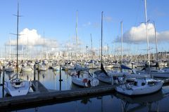 Landscape view of Westhaven Marina Auckland New Zealand. Landscape view of Westhaven Marina and Auckland skyline in Auckland, New Zealand Stock Photos
