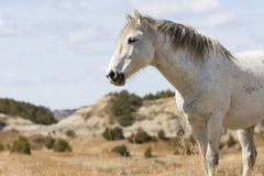 Landscape view of wild stallion Stock Image