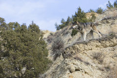 Landscape view of wolf on mountain ledge Royalty Free Stock Images
