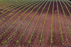 landscape vines Arkivbild