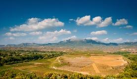 Landscape of vineyard Stock Photo