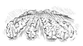 Landscape with vineyard. Illustration - landscape with fields and vineyards royalty free illustration