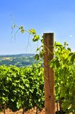 Landscape with vineyard. Summer landscape with vineyard in rural Serbia stock images