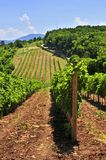 Landscape with vineyard Stock Photos