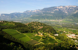 Landscape - Vineyard and apple tree. Panoramic view of a farm (Trentino Alto Adige, Italy) that produces wine and fine apple typical of the area (vineyard and royalty free stock photography
