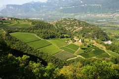Landscape - Vineyard and apple tree. Panoramic view of a farm (Trentino Alto Adige, Italy) that produces wine and fine apple typical of the area (vineyard and stock image
