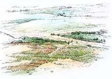 Landscape with vineyard. Architectural drawing Royalty Free Stock Photo