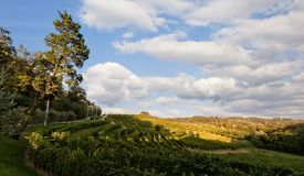 Landscape with vineyard and bleu sky with clouds. Royalty Free Stock Images