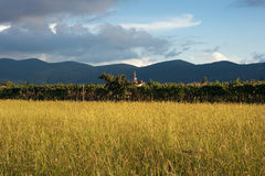Landscape With Vineyard and Church. On a Peaceful Summer Day Royalty Free Stock Image