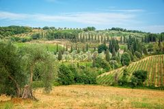 Landscape of vineyard and cypress trees near Montalcino, Tuscany Italy. Landscape of vineyard and cypress trees near Montalcino, Tuscany, Italy Stock Photography