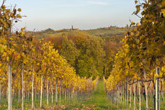 Landscape with Vineyard in fall. Colors Stock Photo