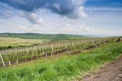 Landscape with vineyard in the hills Stock Photography