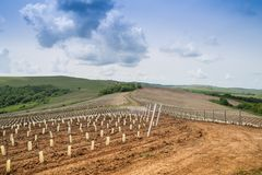 Landscape with vineyard in the hills Stock Images