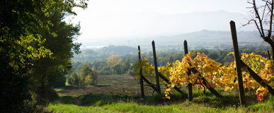 Landscape with a vineyard in Italy. Landscape with an old vineyard in fall time in Italy royalty free stock images