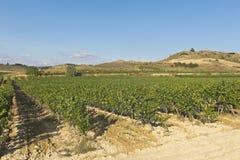 Landscape of vineyard Stock Images