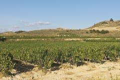 Landscape of vineyard royalty free stock photos