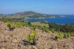 Landscape vineyard Mediterranean sea France Stock Photo